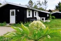 Ferienhaus in Thyholm für 6 Personen
